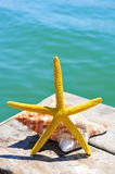 Starfish and conch on a wooden pier Royalty Free Stock Images