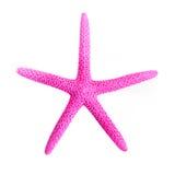 Starfish cor-de-rosa Imagens de Stock Royalty Free