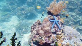 Starfish on a coral reef. Leyte, Philippines.