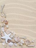 Starfish,corals and seashells Stock Photos