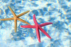 Starfish couple Royalty Free Stock Photography