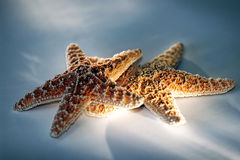 Starfish Couple with Light Effect. Two Starfish with studio light effect ~ represents vacation, travel, romance, romantic getaways, etc stock photo