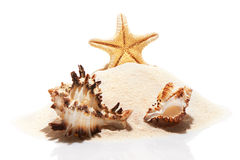 Starfish and couple of seashells on pile of beach sand Stock Photos