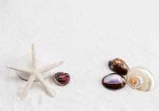 Starfish, cowrie and conch on the white sand background Stock Photos