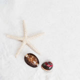 Starfish and cowrie on the white sand background Stock Photography