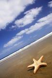 Starfish da praia Fotografia de Stock