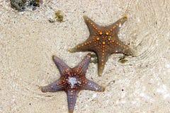 Starfish dark. Starfish in the Indian ocean Royalty Free Stock Photos