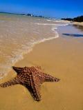 Starfish in der Ozeanbrandung Lizenzfreie Stockbilder