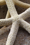 Starfish Detail Royalty Free Stock Photography