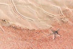 Starfish, die auf dem rosa Sand des shelly Strandes liegen Stockbild