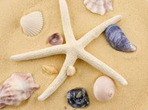 Starfish and seashells on beach sand Stock Photo