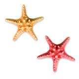 Starfish do verão foto de stock