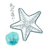 Starfish drawing on white background. Hand drawn seafood illustration. Starfish drawing on white background. Hand drawn outline seafood illustration Stock Photo