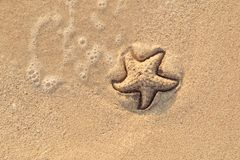 Starfish drawn on the beach sand being washed away by a wave. Foaming sea wave coming to wash a picture on wet yellow stock image