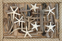 Starfish and Driftwood. Starfish sea shells and driftwood abstract background over oak wood with rope surround Royalty Free Stock Photo