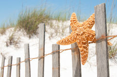 Starfish drying on fence Stock Photography