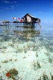 Starfish e erva daninha do mar Fotos de Stock