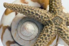 Starfish e escudo Fotografia de Stock