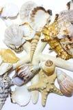 Starfish e escudos fotografia de stock
