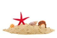 Starfish e escudos fotos de stock