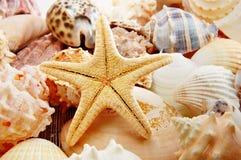 Starfish e escudos imagens de stock