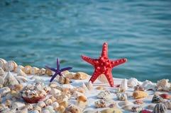 Starfish e escudos Foto de Stock