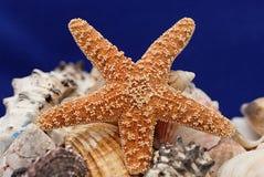 Starfish e escudos Imagem de Stock Royalty Free