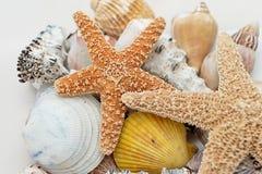 Starfish e escudos Foto de Stock Royalty Free