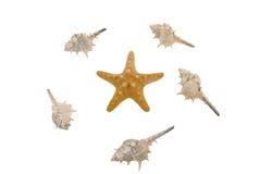 Starfish e escudos imagem de stock