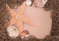 Starfish e escudos na placa de mensagem líquida da bordadura Imagem de Stock