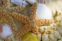 Starfish e escudos na praia imagens de stock