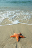 Starfish e o oceano Fotos de Stock Royalty Free