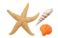Starfish e Seashells Foto de Stock Royalty Free