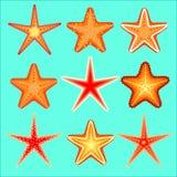 Starfish, ein Satz von neun Wahlen Lizenzfreies Stockbild