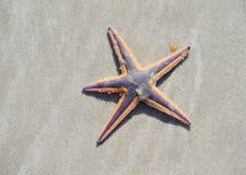 Starfish em uma praia arenosa Foto de Stock