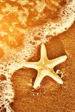 Starfish on the exotic beach, ocean waves at warm sunset. Travel, vacation, holidays concepts Stock Photography