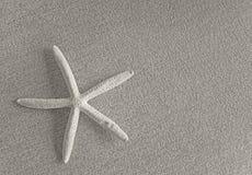 Starfish on fabric Stock Photo