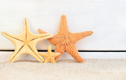 Starfish. Family starfish on the beach royalty free stock photography
