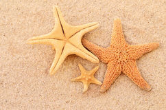 Starfish. Family on the beach stock images