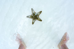 Starfish and the feet of man Royalty Free Stock Images