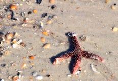 Starfish-fehlender Arm Lizenzfreies Stockbild