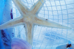 Starfish in a fishing net Stock Photos