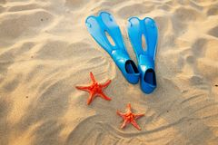 Starfish and flippers on sand Stock Photo