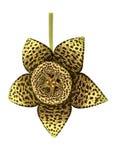 Starfish Flower Stock Photography