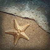 Starfish in the foam of the surf on the shore Royalty Free Stock Images