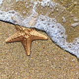 Starfish in the foam of the surf on the shore Stock Image