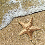 Starfish in the foam of the surf on the shore Royalty Free Stock Photography