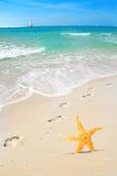 Starfish and Footprints on Beach Stock Image