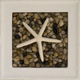 Starfish frame Stock Images