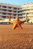 Starfish In Front of a Luxury Hotel Royalty Free Stock Photo